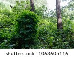 erithacus rubecula. nest... | Shutterstock . vector #1063605116