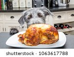 Stock photo funny photo of a bad dog with paws on kitchen counter looking at a roasted chicken with big excited 1063617788