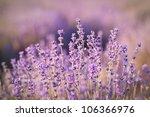 purple lavender flowers  ... | Shutterstock . vector #106366976