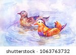 two mandarin ducks swim on the... | Shutterstock . vector #1063763732
