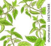nettle vector frame | Shutterstock .eps vector #1063765688