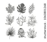 hand drawn plant and flower... | Shutterstock .eps vector #1063801268