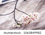 cherry blossoms close up in... | Shutterstock . vector #1063849982