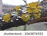 Tree Mushrooms Moss
