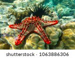 Underwater Photography. Red...