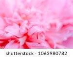 blurred delicate petals of a... | Shutterstock . vector #1063980782