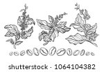 tropical set of coffee tree...   Shutterstock . vector #1064104382