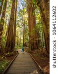 Muir Woods National Monument...