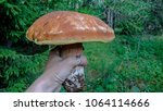 natural edible mushrooms in the ... | Shutterstock . vector #1064114666