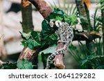 funny little mokeys subspecies... | Shutterstock . vector #1064129282