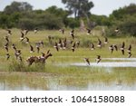 african wild dog  lycaon pictus ... | Shutterstock . vector #1064158088