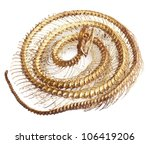 Snake Bone On White Background