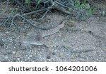 Small photo of Arizona Diamondback rattle snake in Desert near Scottsdale, AZ
