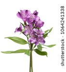 alstroemeria flowers isolated... | Shutterstock . vector #1064241338