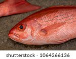 Beautiful Red Snappers Fresh...