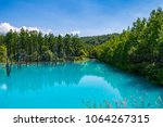 dry tree and forest at...   Shutterstock . vector #1064267315