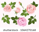 pink and beige vector roses and ... | Shutterstock .eps vector #1064270168