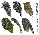 set of colorful bird wings of... | Shutterstock . vector #1064272862