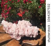 pink halite mineral specimen...   Shutterstock . vector #1064287532