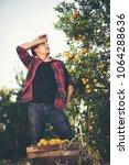 farmer man harvesting oranges...   Shutterstock . vector #1064288636