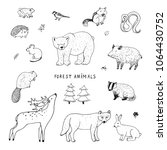 cute woodland forest animals... | Shutterstock .eps vector #1064430752