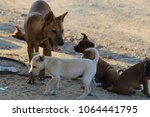 group of dog family on ground | Shutterstock . vector #1064441795