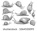 garden snail illustration ... | Shutterstock .eps vector #1064520095