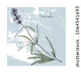 hand drawn lavender flowers on... | Shutterstock .eps vector #1064541695