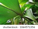 a tropical green rainforest on... | Shutterstock . vector #1064571356
