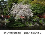 Stock photo a view of the japanese shinto shrine in spring 1064586452