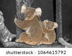 koala mother hug. | Shutterstock . vector #1064615792