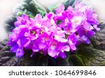 vibrant violets on window... | Shutterstock . vector #1064699846