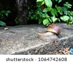 snail after raining | Shutterstock . vector #1064742608