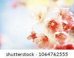 spring flowers. sakura | Shutterstock . vector #1064762555