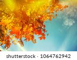 autumn leaves background | Shutterstock . vector #1064762942