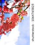 spring flowers. sakura | Shutterstock . vector #1064765825