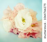 fresh flowers background | Shutterstock . vector #1064766275