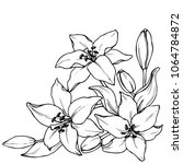 ink  pencil   the  flowers of... | Shutterstock .eps vector #1064784872
