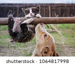Stock photo a funny kitten tries to keep from falling from a stick 1064817998