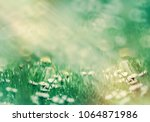 selective focus on daisy flower ... | Shutterstock . vector #1064871986