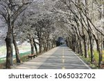 cherry blossom tunnel road ... | Shutterstock . vector #1065032702