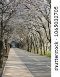 cherry blossom tunnel road ... | Shutterstock . vector #1065032705