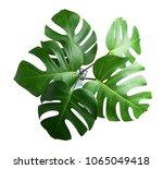 tropical botanical  leaves...   Shutterstock . vector #1065049418