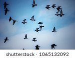a flock of birds flying at the... | Shutterstock . vector #1065132092