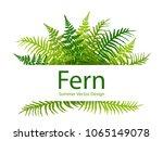 fern frond tropical leaves... | Shutterstock .eps vector #1065149078