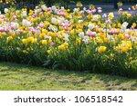 Bright Sunny Spring Flowerbed ...