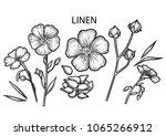 graphic linen set. floral... | Shutterstock .eps vector #1065266912