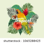 vintage composition with exotic ... | Shutterstock .eps vector #1065288425