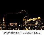 brown bear contour  silhouette. | Shutterstock . vector #1065341312