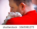 Stock photo the man loves his pets little white rats 1065381275